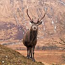 Glen Etive Stag by Brian Kerr