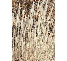 Winter Grass 2012 Photographic Print
