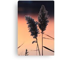 Delicate Sunset Flower II Canvas Print