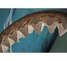 Jaws Photographic Print