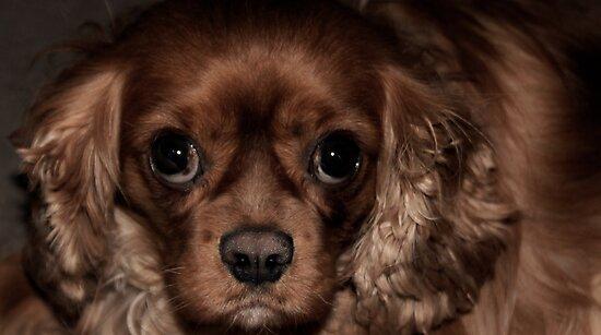Those Puppy Dog Eyes by Ladymoose
