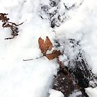 Remnants of Fall-natural coloring by AbigailJoy