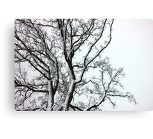 Oak in black and white Canvas Print