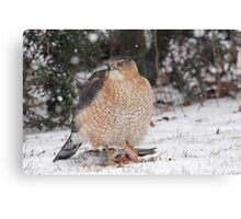Cooper's Hawk With Prey ~ Canvas Print