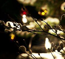 Winter Lights by Denise Abé