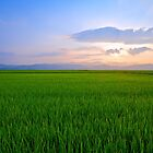 Sunset Over Rice Paddies by Marc Maschhoff
