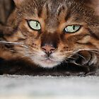 I'm watching you. by Gilberte