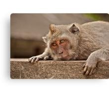 Macaques of Ulu Watu Canvas Print