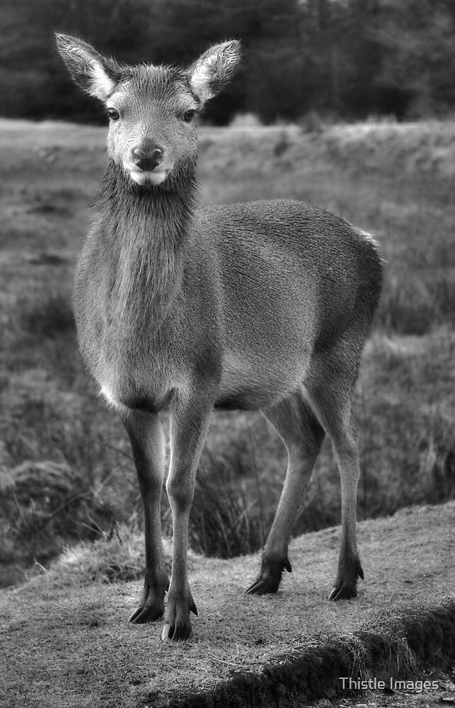Black and White Deer by Linda  Morrison