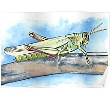Grasshopper Watercolours and Ink Poster