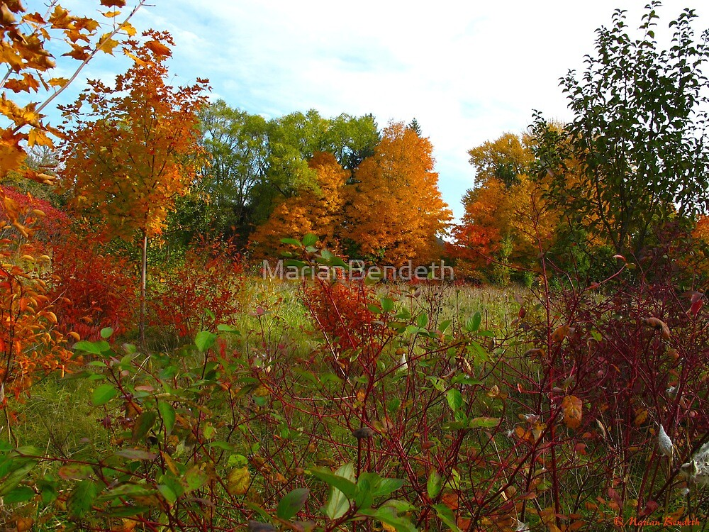Colourful Canada in the heart of October by MarianBendeth