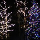 Christmas Lights in the Night by lechnera09