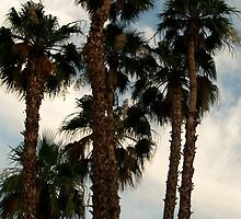 Palm Trees in Palm Springs by lechnera09