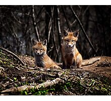 A Pair of Cute Kit Foxes 3 Photographic Print