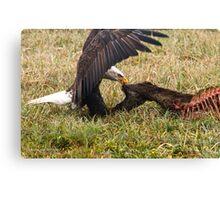 Vancouver Island Bald Eagle Canvas Print