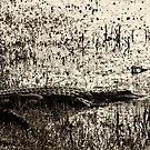 Okeefenokee Alligator by Jim Haley