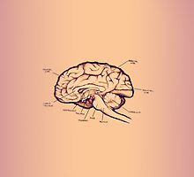 Brain Case by Selador