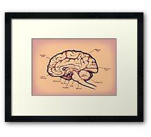 Brain Diagram Framed Print