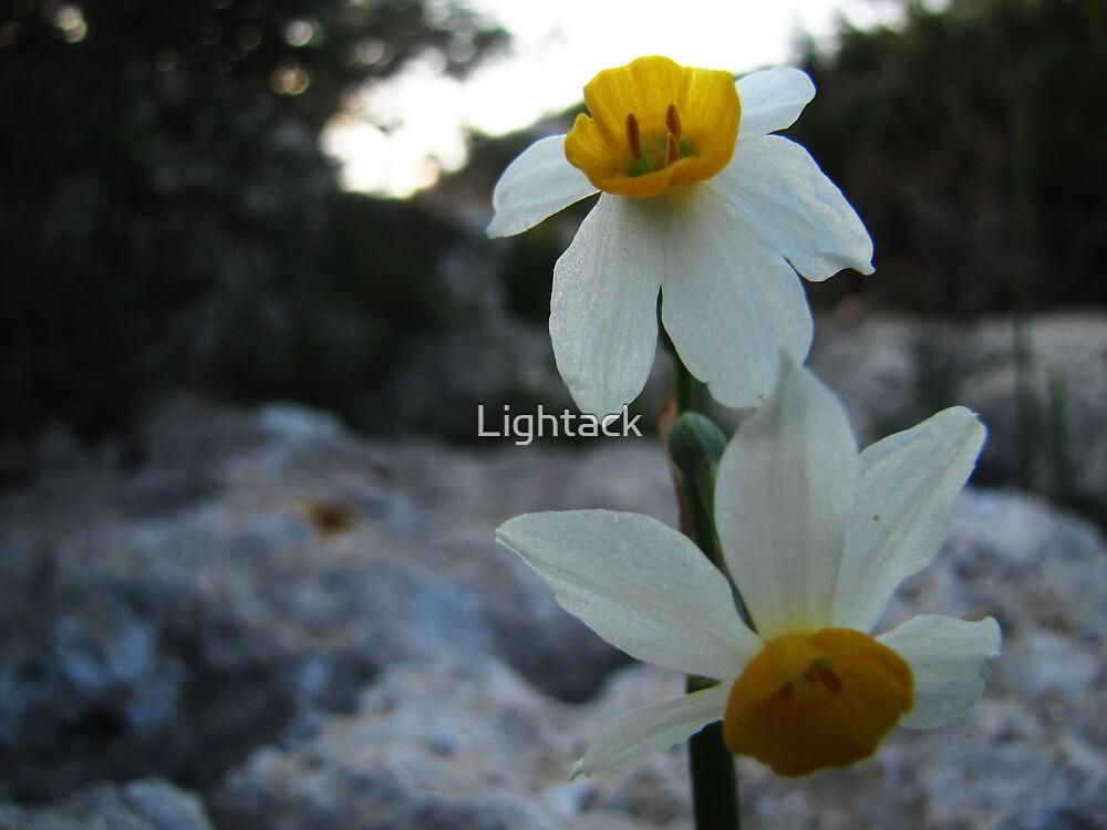 Divide by Lightack