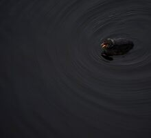 Duckling by Sheaney