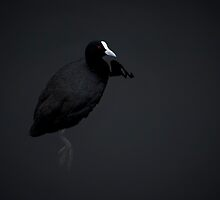 Duck in Space by Sheaney