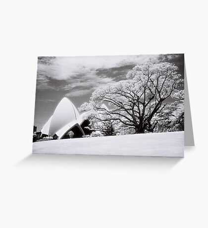 Majestic Tree Greeting Card