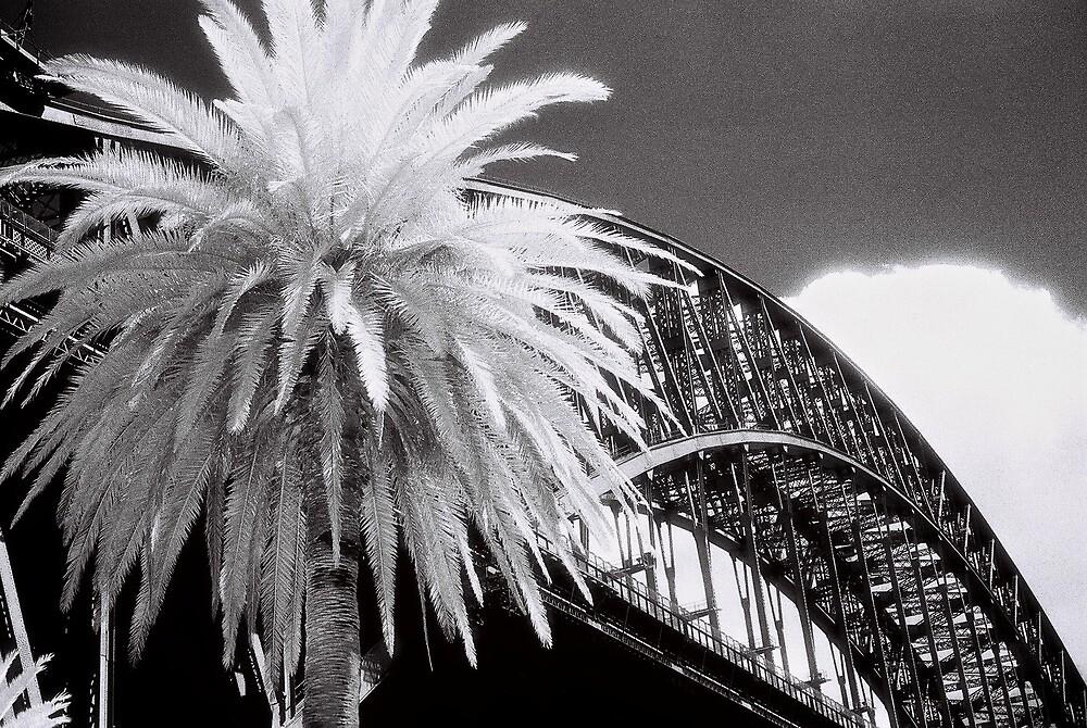 Big White Palm by AndyFeltonPix