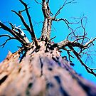 Lookin up a tree by AndyFeltonPix