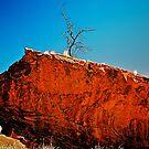 Dead Tree by AndyFeltonPix