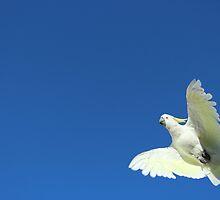 Cockatoo by Chris Kean