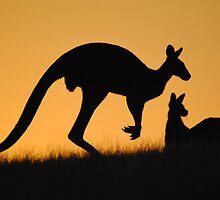 Kangaroo at Sunset - Whittlesea, Victoria by Heather Samsa
