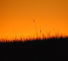 Sunset Grass - Whittlesea, Victoria by Heather Samsa