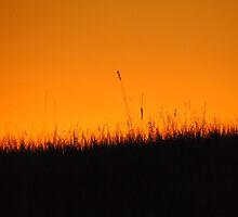 Sunset Grass - Whittlesea, Victoria by Heather Samsa