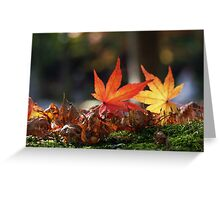 Autumnal beauty 4 Greeting Card