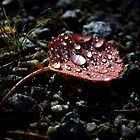 Red Autumn Leaf by Lina Ottosson
