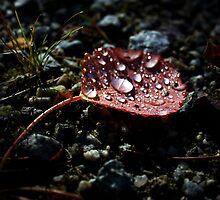 Red Autumn Leaf by Alex Ottosson