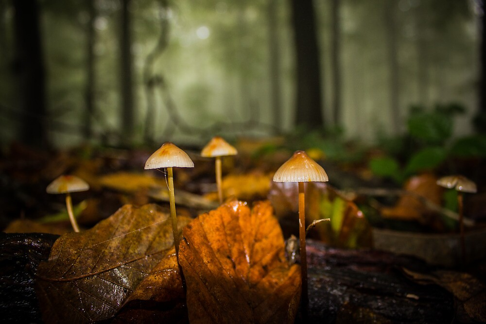 Enchanted Ink Caps by Ian Hufton
