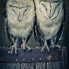 Barn Owls by SamuraiDbn