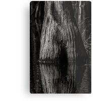 Cypress Trunk Metal Print