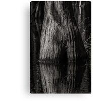Cypress Trunk Canvas Print