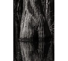Cypress Trunk Photographic Print
