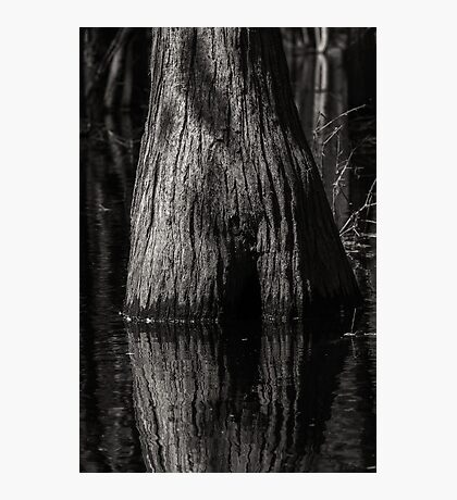 Cypress Trunk Photographic Print
