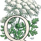 Q is for Queen Anne's Lace -- floating by Stephanie Smith