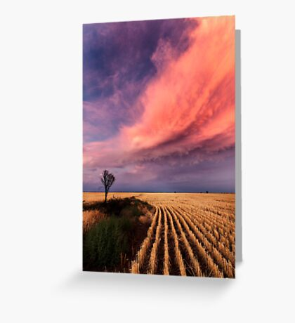 Taking the Long View Greeting Card
