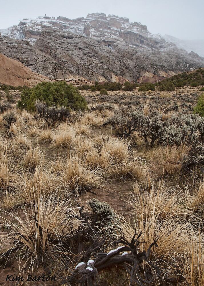 Split Mountain Grasses by Kim Barton