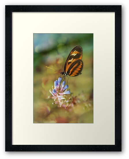 Butterfly  by Linda Cutche