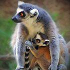 Wild Animals by Savannah Gibbs