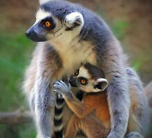 Mother and Baby Monkey by venny