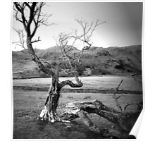 Angry Tree Poster