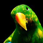 Eclectus Parrot by Tamara  Kenneally